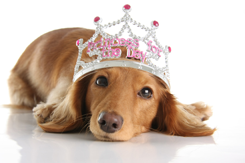 Dog Princess