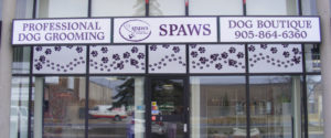 Spaws Professional Dog grooming in Milton