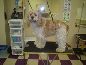 Spaws Professional Dog grooming, Dog Groomer Milton, Dog Grooming Milton, Pet Grooming Milton, Pet Store Milton, Dog Boutique Milton