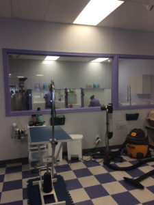 Professional Dog Grooming in Milton