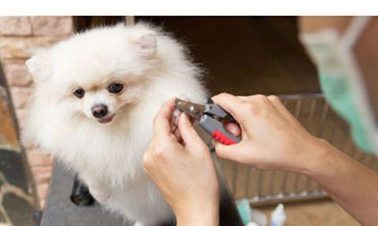 Dog Nail Cutting, Dog Nail Trim